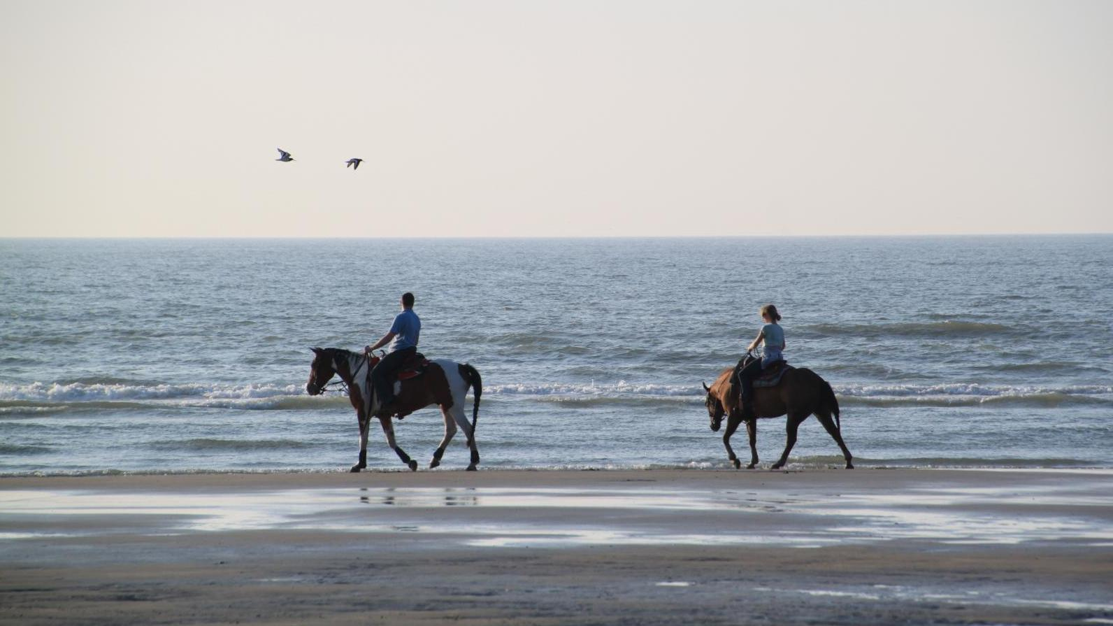 Horse riding on the beach of Egmond aan Zee